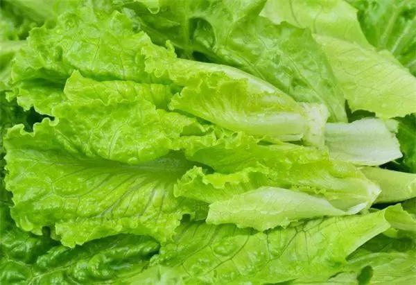 生菜的四大食疗养生功效