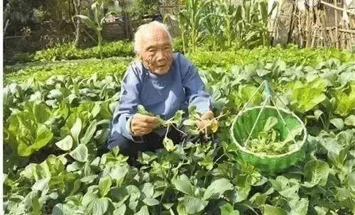 百岁老人30岁的器官,原来长寿就吃它,餐餐不离嘴!