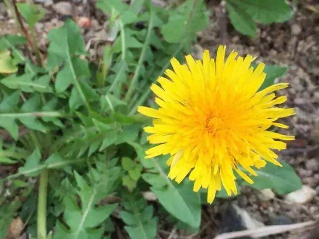 阳台种这几盆花,全家药费都少花!转给爱养花的人!