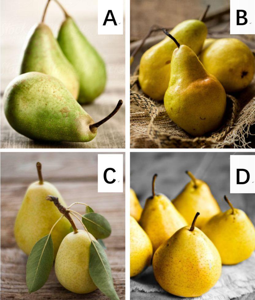 四个梨哪个最甜?测出你最舍不得离开谁!太准了!