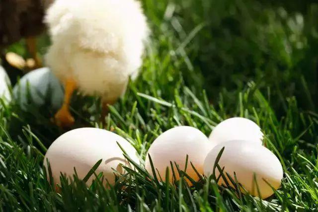 【听健康】鸡蛋这么吃,对心血管特别好!原来一直都忽视了…