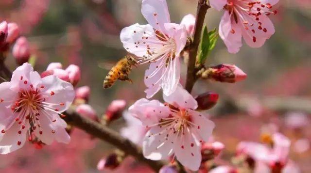 春天赏花时节,过敏了咋办?
