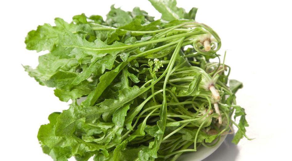 【医生说】春季野菜,它被当灵丹!!城里、乡下都当成宝,原来竟有这么好的功效!千万吃一口!