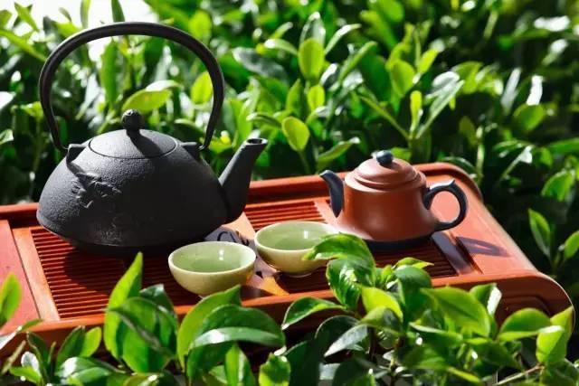 【听健康】血管堵了,喝一杯茶调理回来!