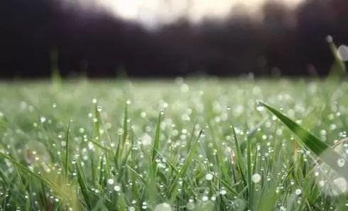 春天湿气大涨,湿重是标,脾虚是本,要想养精神,妙招在这里!