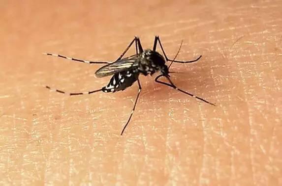 这个方法,让携带几十种疾病的蚊子、蟑螂远离你家!100%见效!