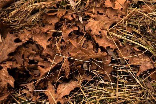一到秋天就感冒?多半是伤了肺!这8个伤肺隐患,能躲就躲了吧