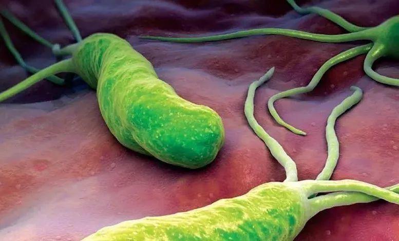 幽门螺杆菌最怕四种食物,长期坚持,四种胃病会离你更远!
